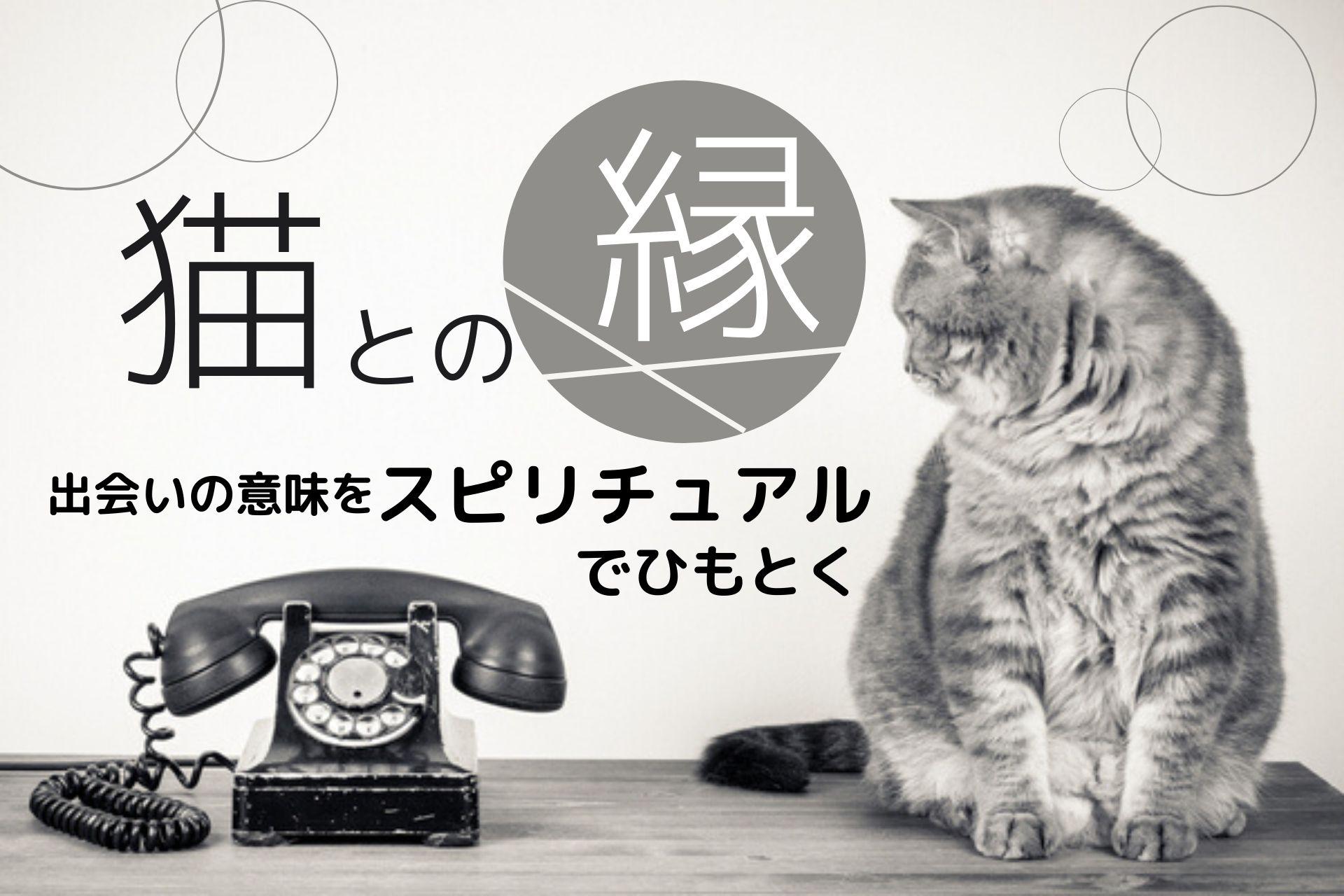 スピリチュアル 猫との縁