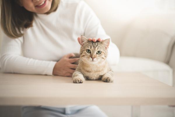 スピリチュアル 猫との縁 飼い主