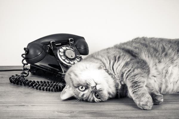 スピリチュアル 猫との縁 占い
