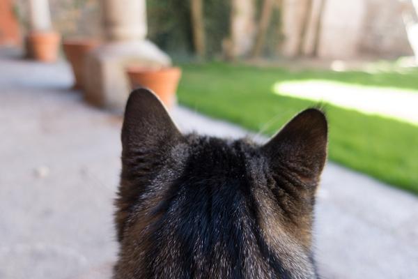 スピリチュアル 猫との縁 威嚇