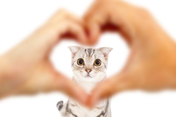 スピリチュアル 猫との縁 心の声