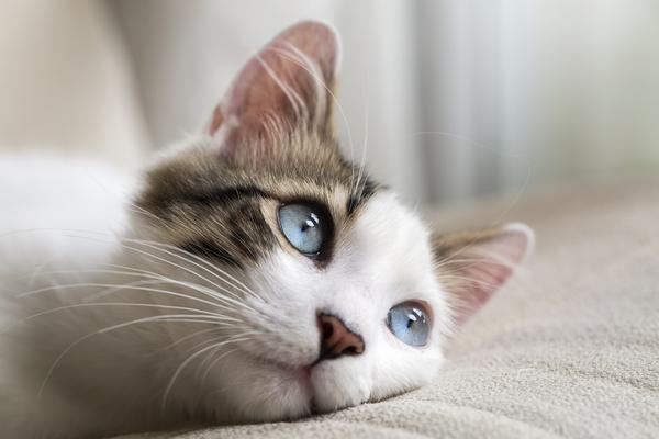 スピリチュアル 猫との縁 猫の目