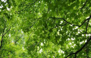 新潟 占い 幸運の森 当たる 田村