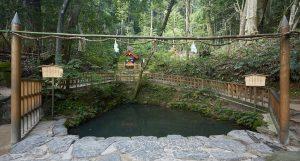 八重垣神社 鏡の池 縁占い